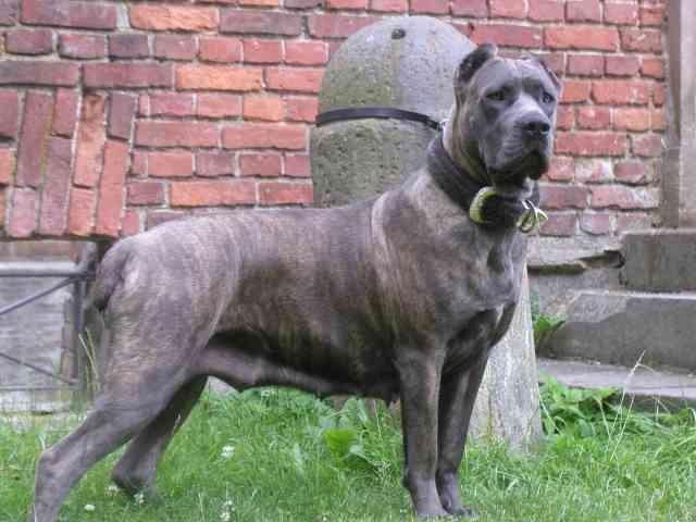 Кэрролл намерен приобрести двух собак-убийц