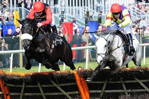 Лошадь Фергюсона примет участие в престижных скачках