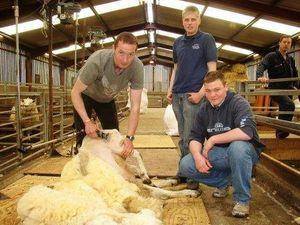 Новозеландские фермеры продвигают стрижку овец в программу ОИ