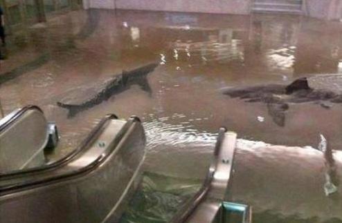 НБА. Матч Бруклин — Нью-Йорк отложен из-за урагана